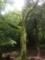 石神井公園のヤマザクラ