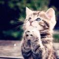 天仰ぎ思い考え祈りを捧げる猫 ナメネコの様なトリックではない