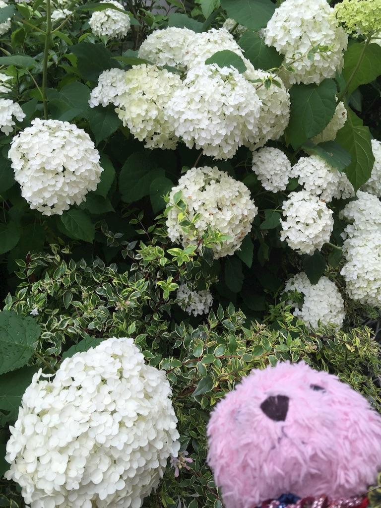 f:id:pinkstrawberryflavor:20160616232805j:image