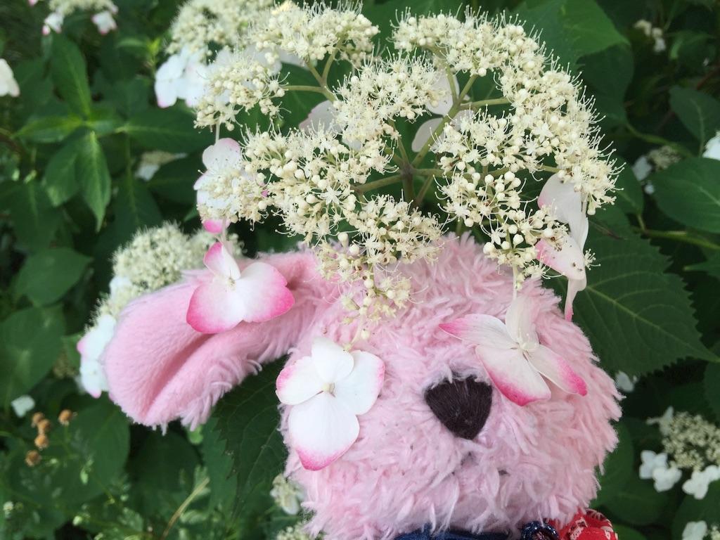 f:id:pinkstrawberryflavor:20160620110305j:image