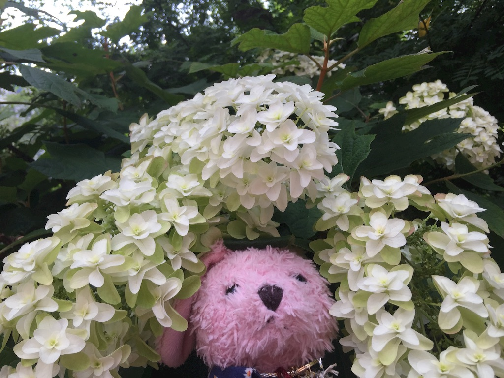 f:id:pinkstrawberryflavor:20170619114515j:image