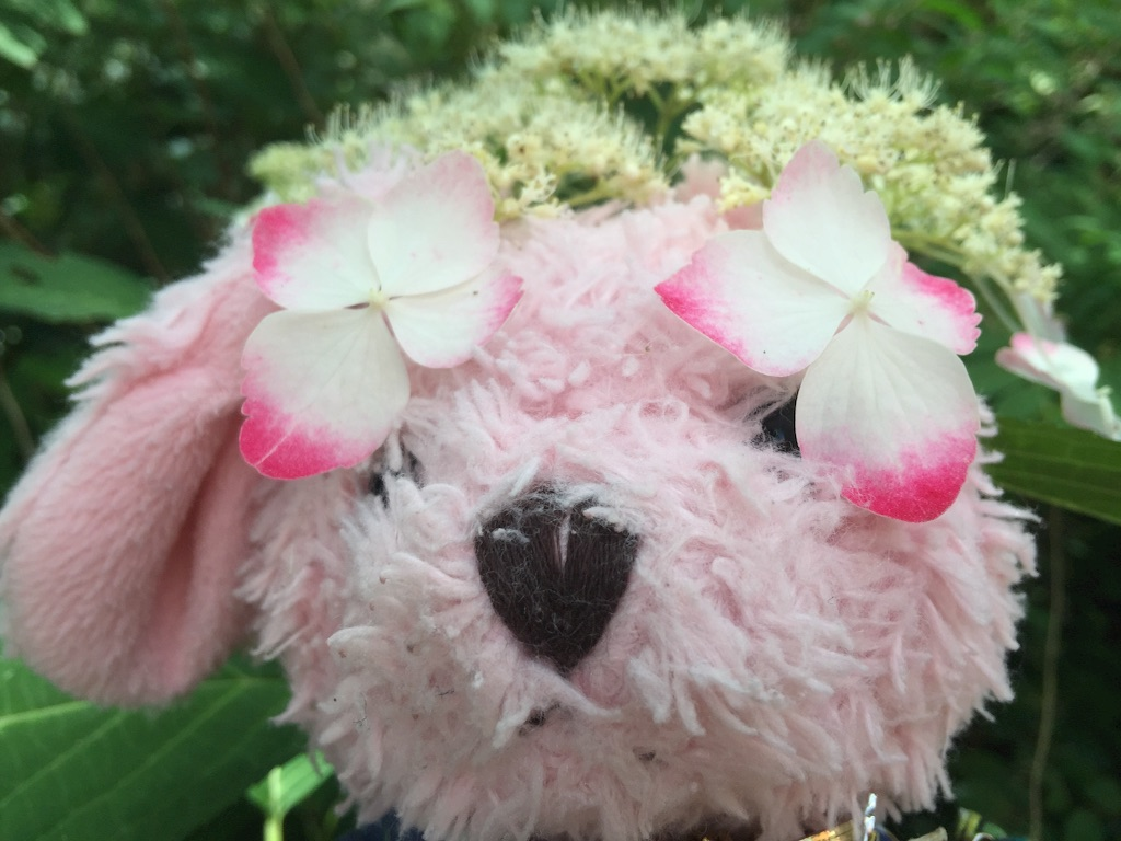 f:id:pinkstrawberryflavor:20170619114534j:image