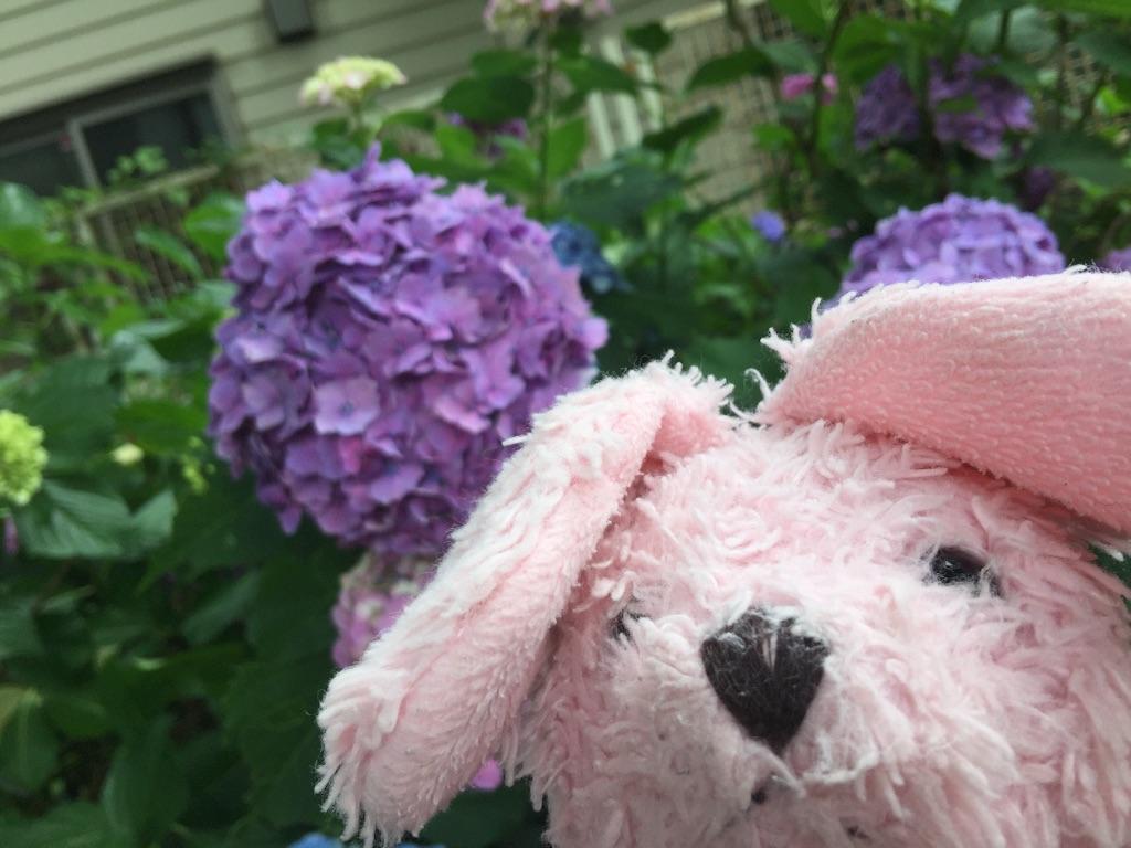 f:id:pinkstrawberryflavor:20170702200156j:image