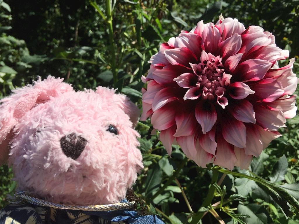 f:id:pinkstrawberryflavor:20171015151430j:image