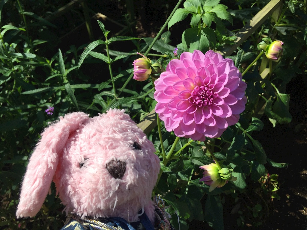 f:id:pinkstrawberryflavor:20171015151452j:image