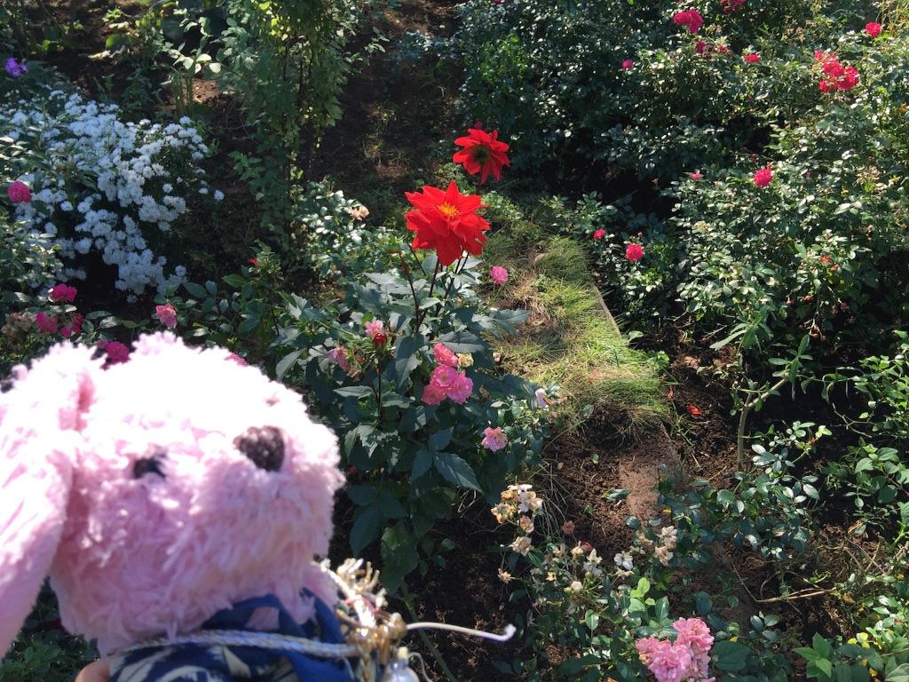 f:id:pinkstrawberryflavor:20171015151743j:image