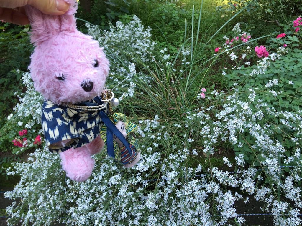 f:id:pinkstrawberryflavor:20171015151921j:image