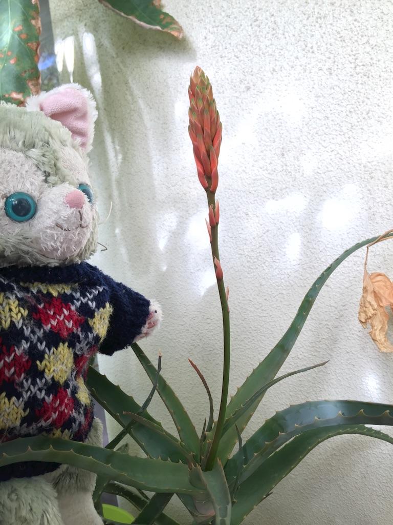 f:id:pinkstrawberryflavor:20180107105550j:image