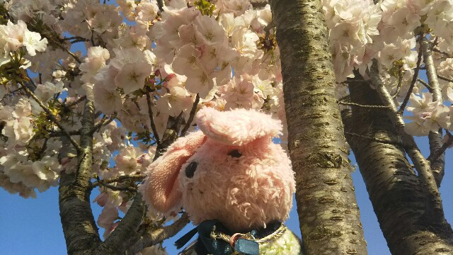 f:id:pinkstrawberryflavor:20180401121926j:image