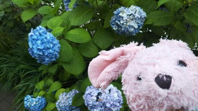 f:id:pinkstrawberryflavor:20180624133536j:image