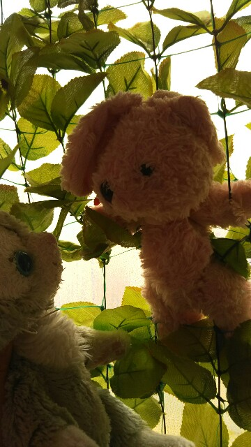 f:id:pinkstrawberryflavor:20180714113930j:image
