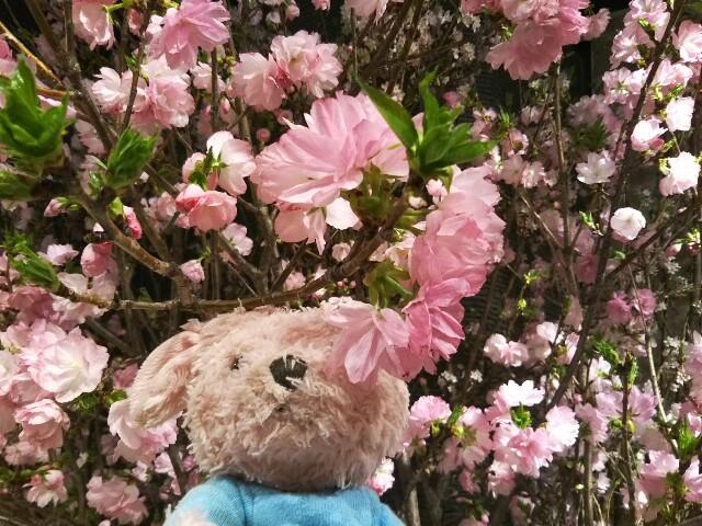 f:id:pinkstrawberryflavor:20190404231058j:image