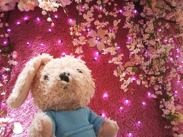 f:id:pinkstrawberryflavor:20190404231755j:image