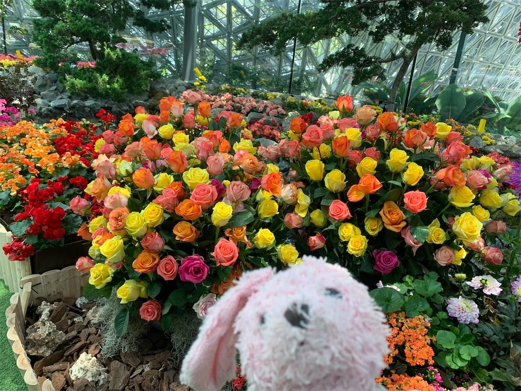 f:id:pinkstrawberryflavor:20200412102815j:image