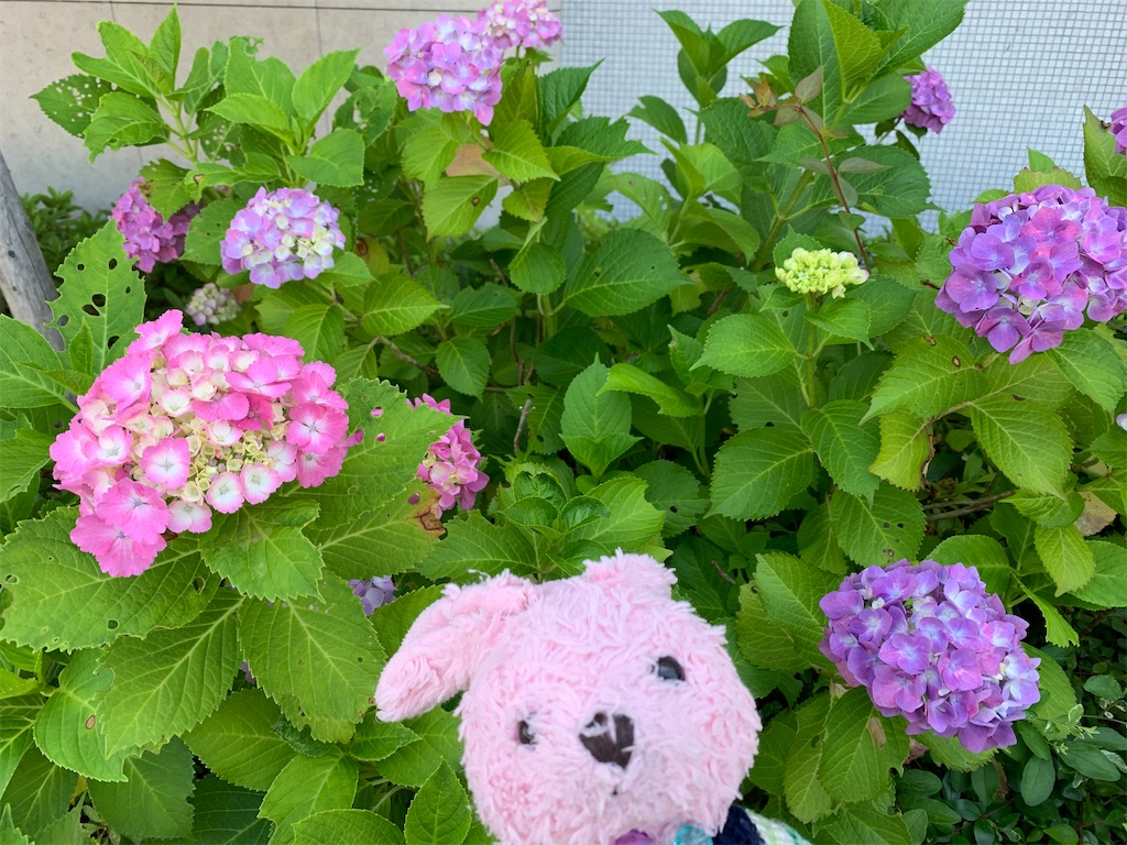 f:id:pinkstrawberryflavor:20200621133429j:image