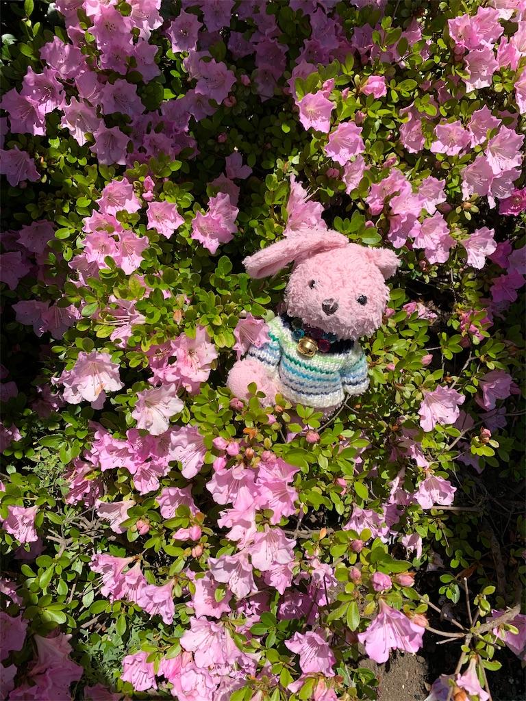 f:id:pinkstrawberryflavor:20200621133439j:image
