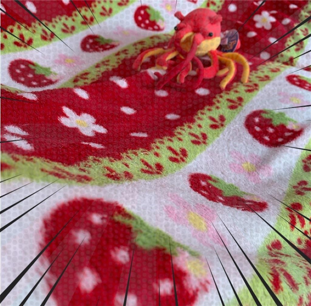 f:id:pinkstrawberryflavor:20210117130120j:plain