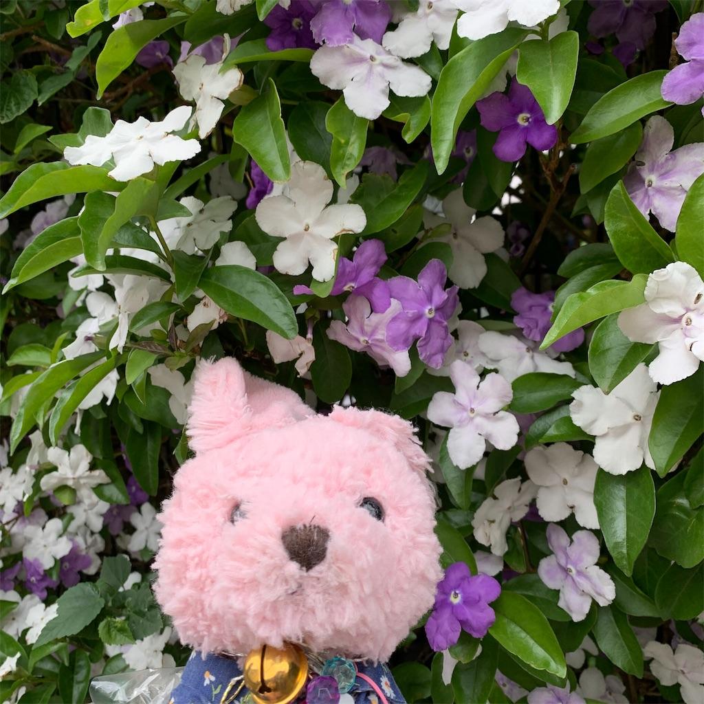 f:id:pinkstrawberryflavor:20210518102614j:plain