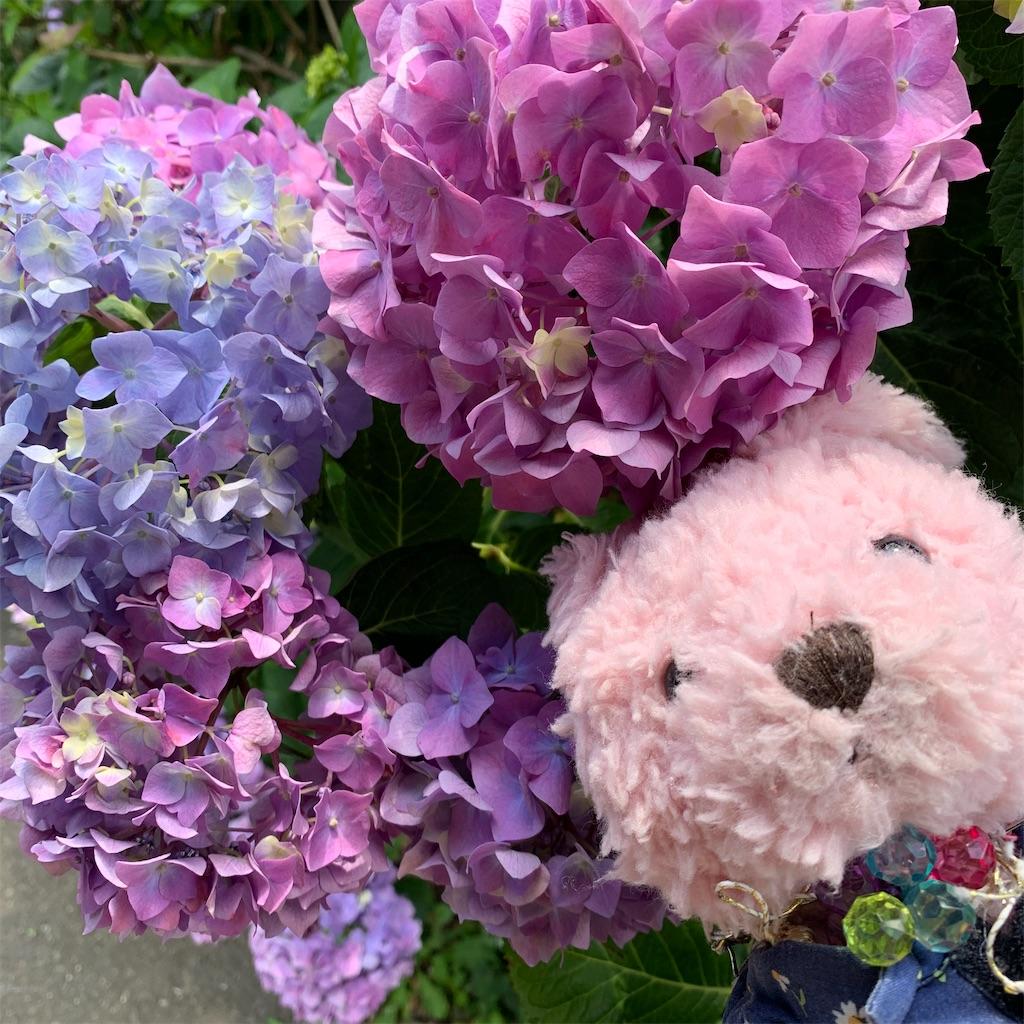 f:id:pinkstrawberryflavor:20210607100449j:image