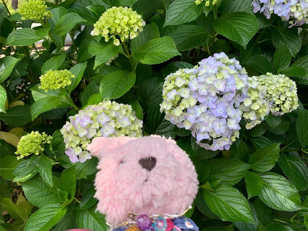 f:id:pinkstrawberryflavor:20210607100506j:image