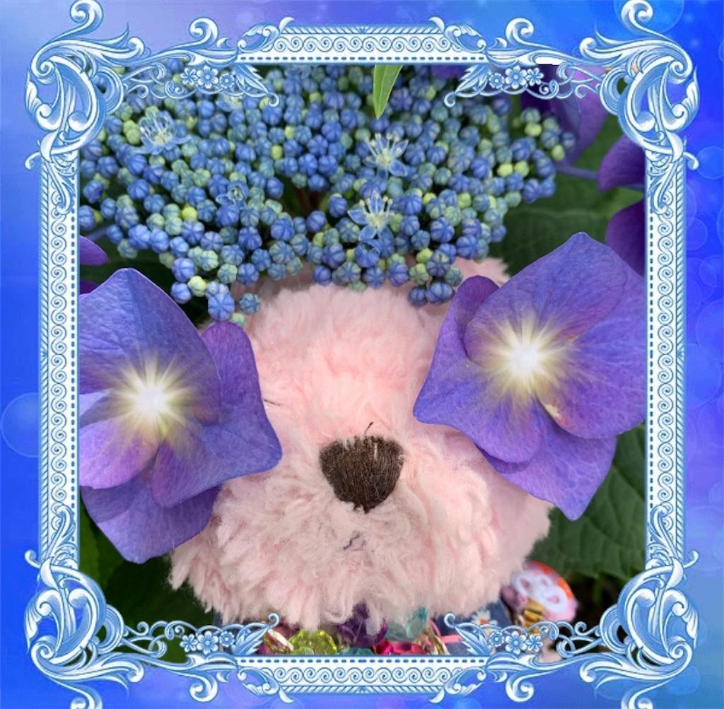 f:id:pinkstrawberryflavor:20210607102611j:image