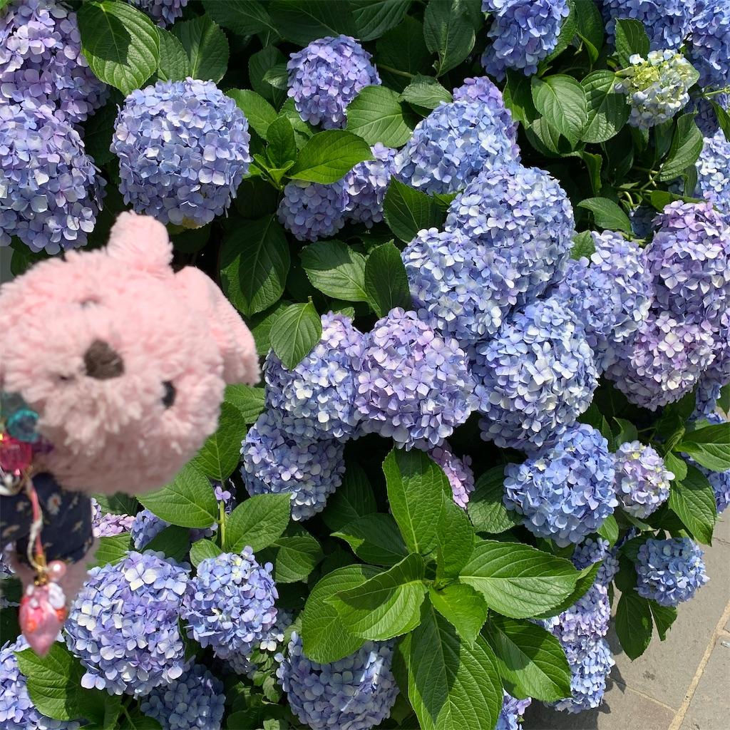 f:id:pinkstrawberryflavor:20210614101547j:image