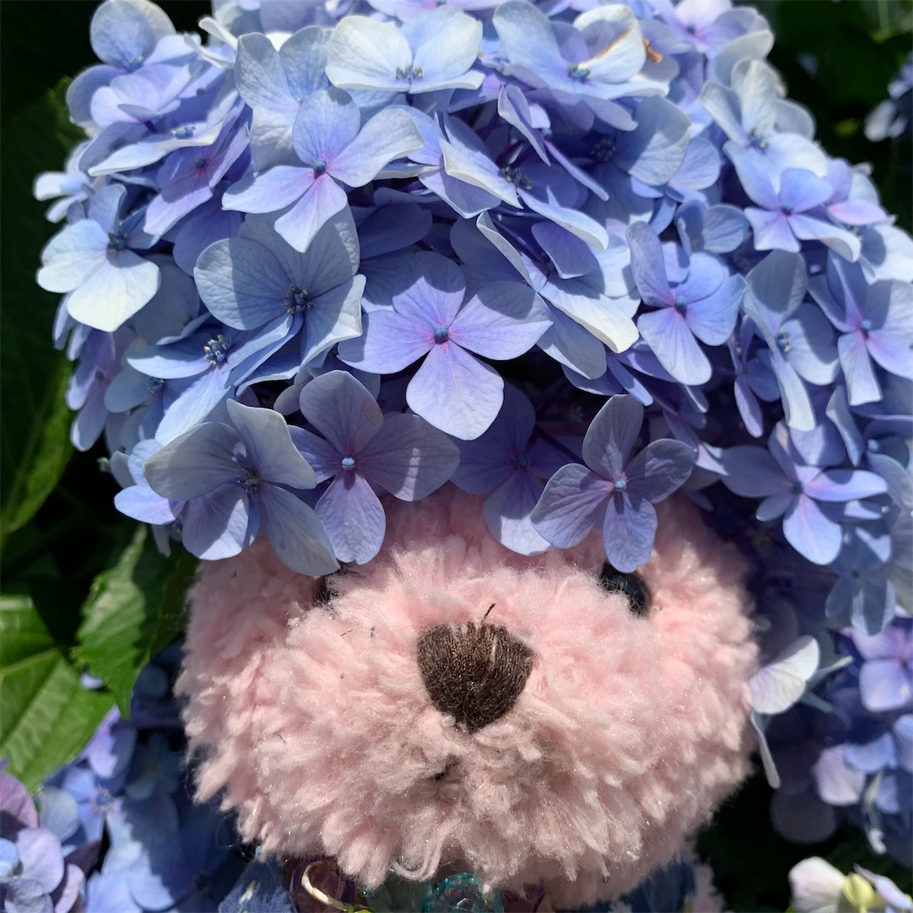 f:id:pinkstrawberryflavor:20210614101552j:image