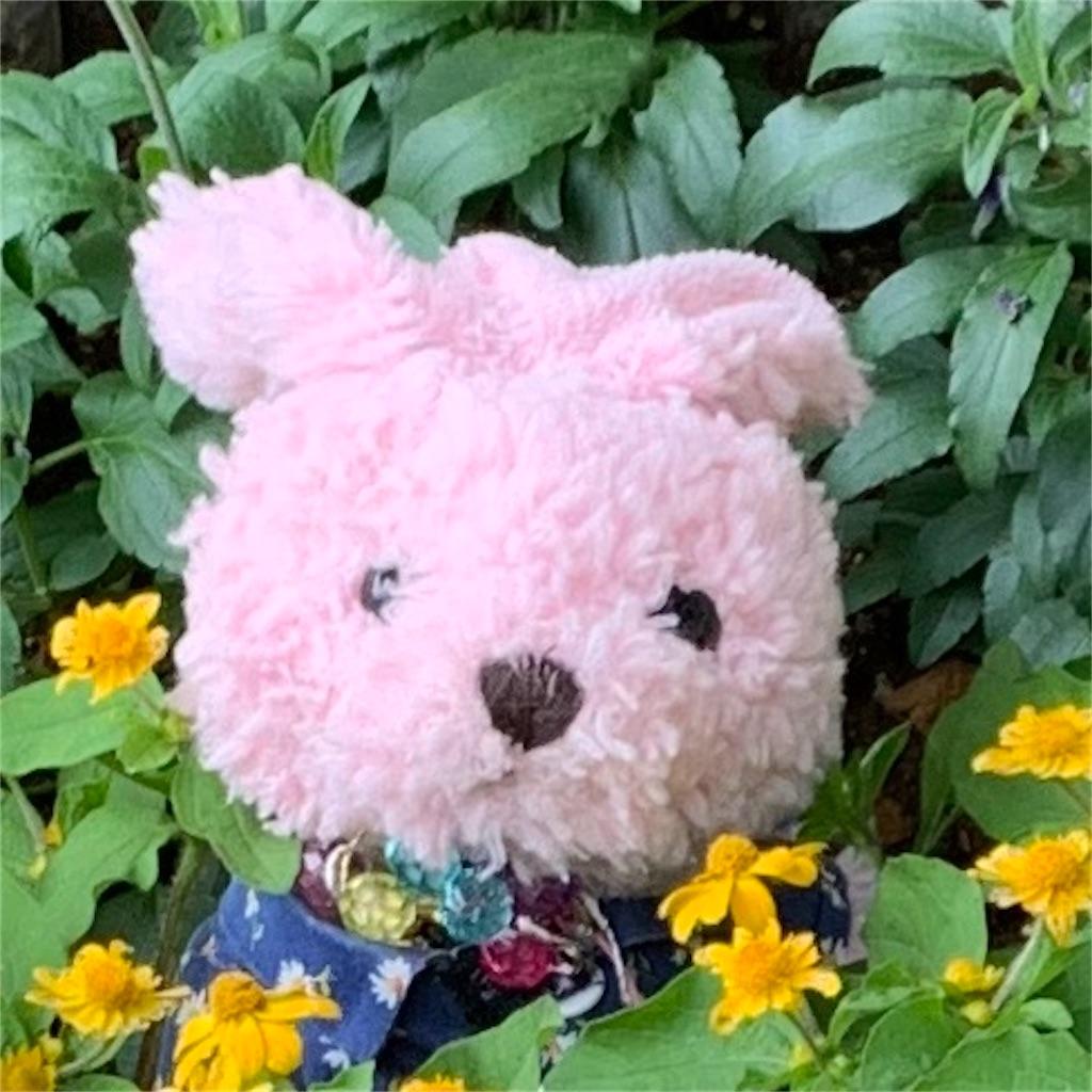 f:id:pinkstrawberryflavor:20210615000926j:image
