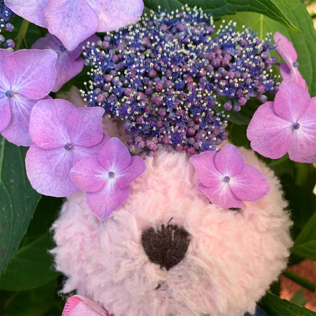 f:id:pinkstrawberryflavor:20210617111623j:image