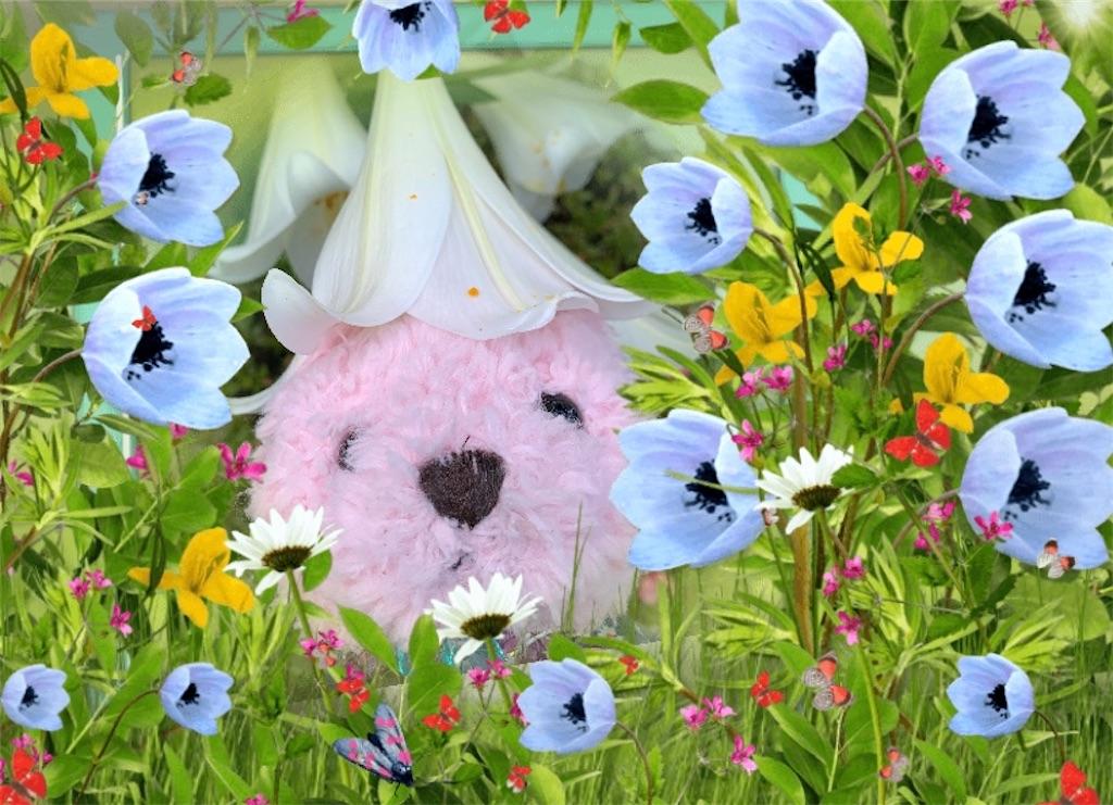 f:id:pinkstrawberryflavor:20210625003808j:plain