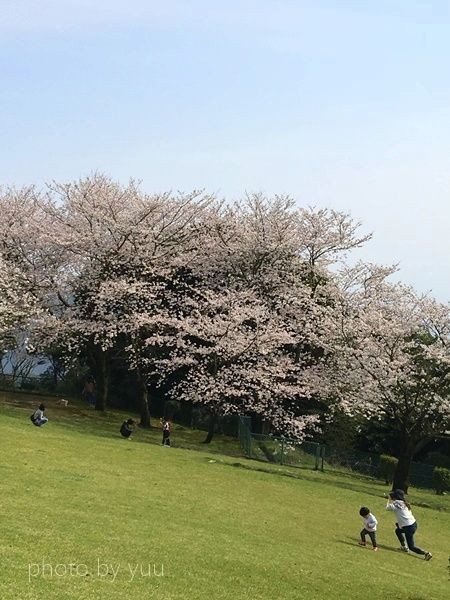 城山公園で花見