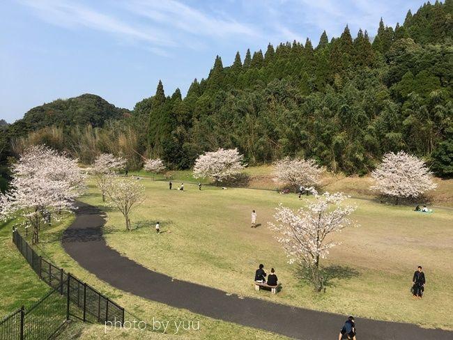 国分城山公園の駐車場横の桜