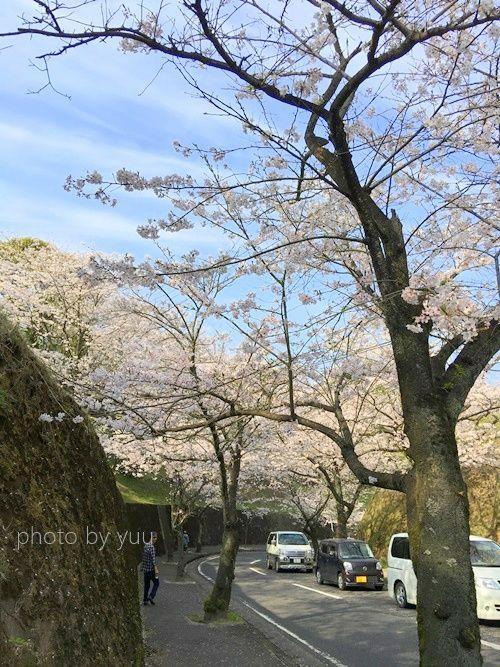 城山公園の桜並木