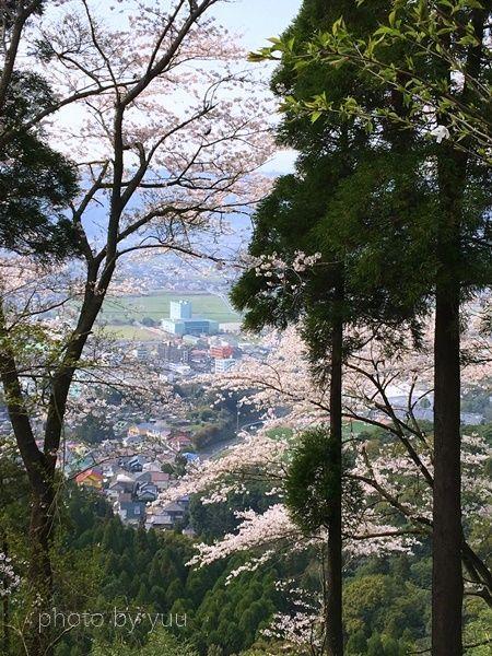 城山公園からの桜見