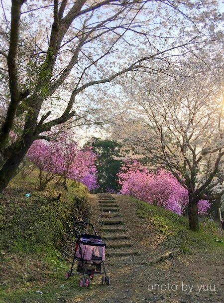 弥五郎の里の花見