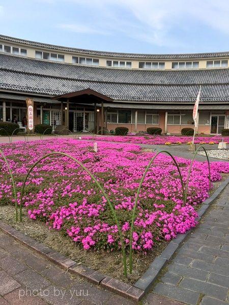 弥五郎の里の芝サクラ
