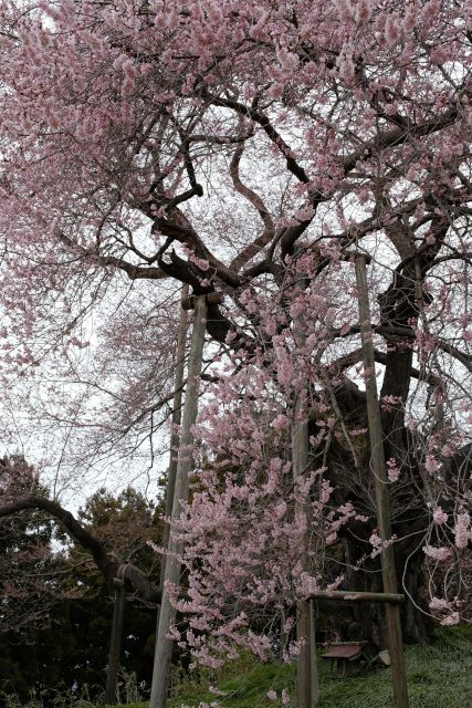 f:id:piro-yu:20170418223507j:plain