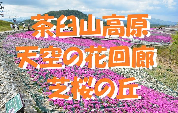 f:id:pisukechin:20200412084638j:plain