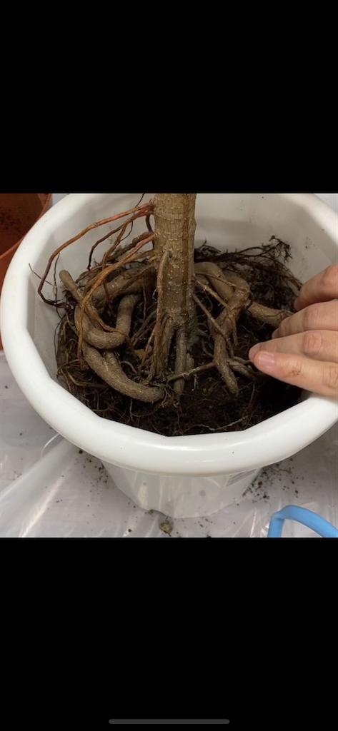 f:id:pitcherplant:20200524230707p:image