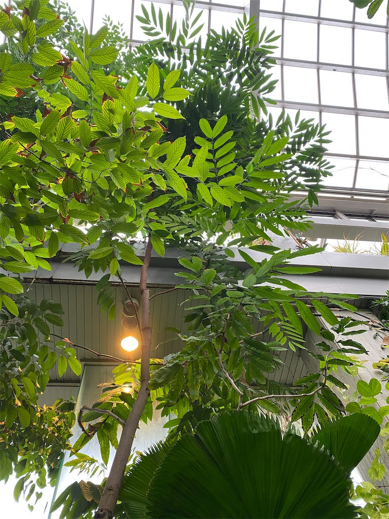 f:id:pitcherplant:20200527091458j:image