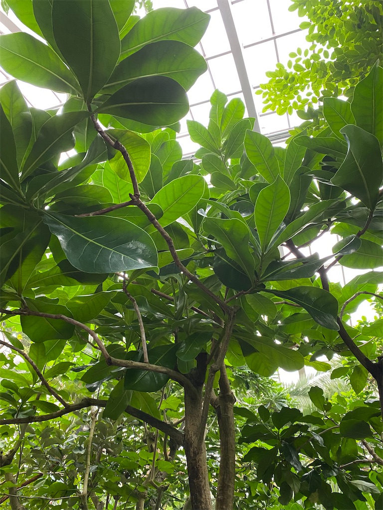 f:id:pitcherplant:20200527092430j:image