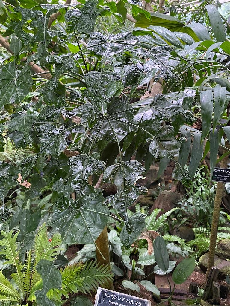 f:id:pitcherplant:20200527145512j:image