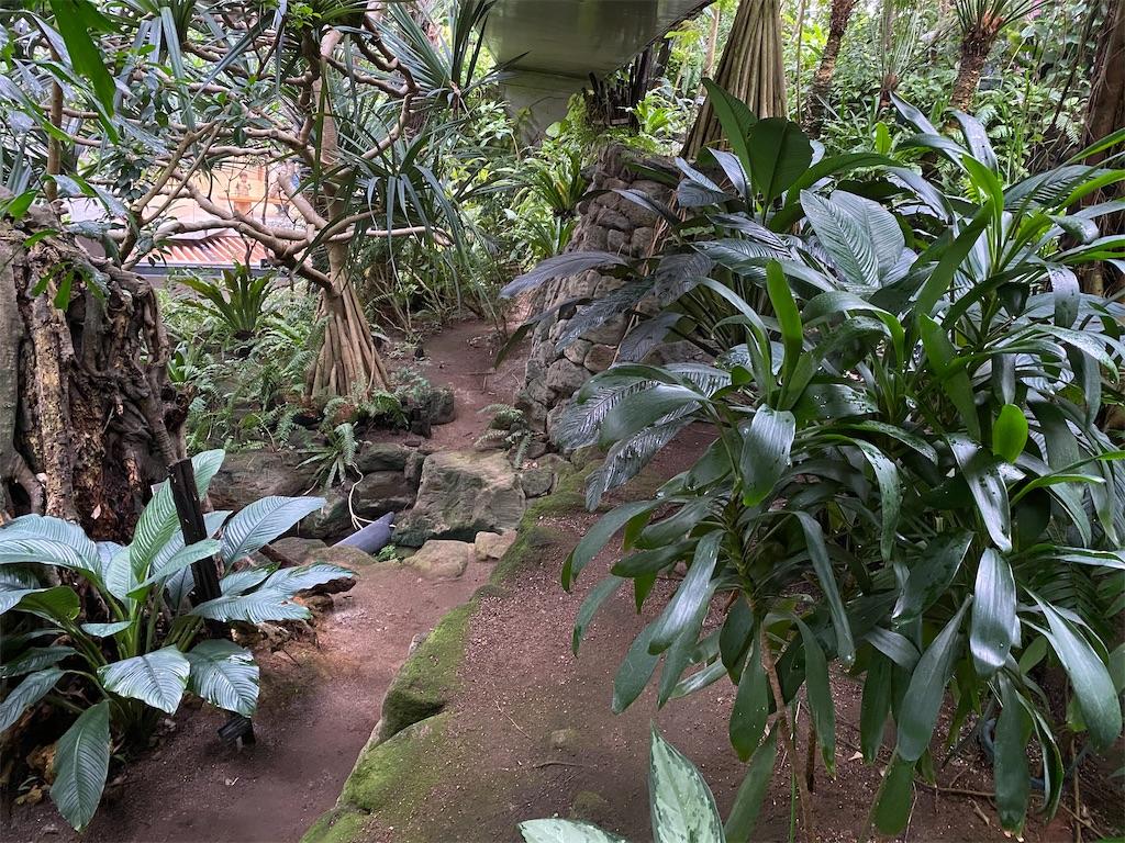f:id:pitcherplant:20200527192357j:image