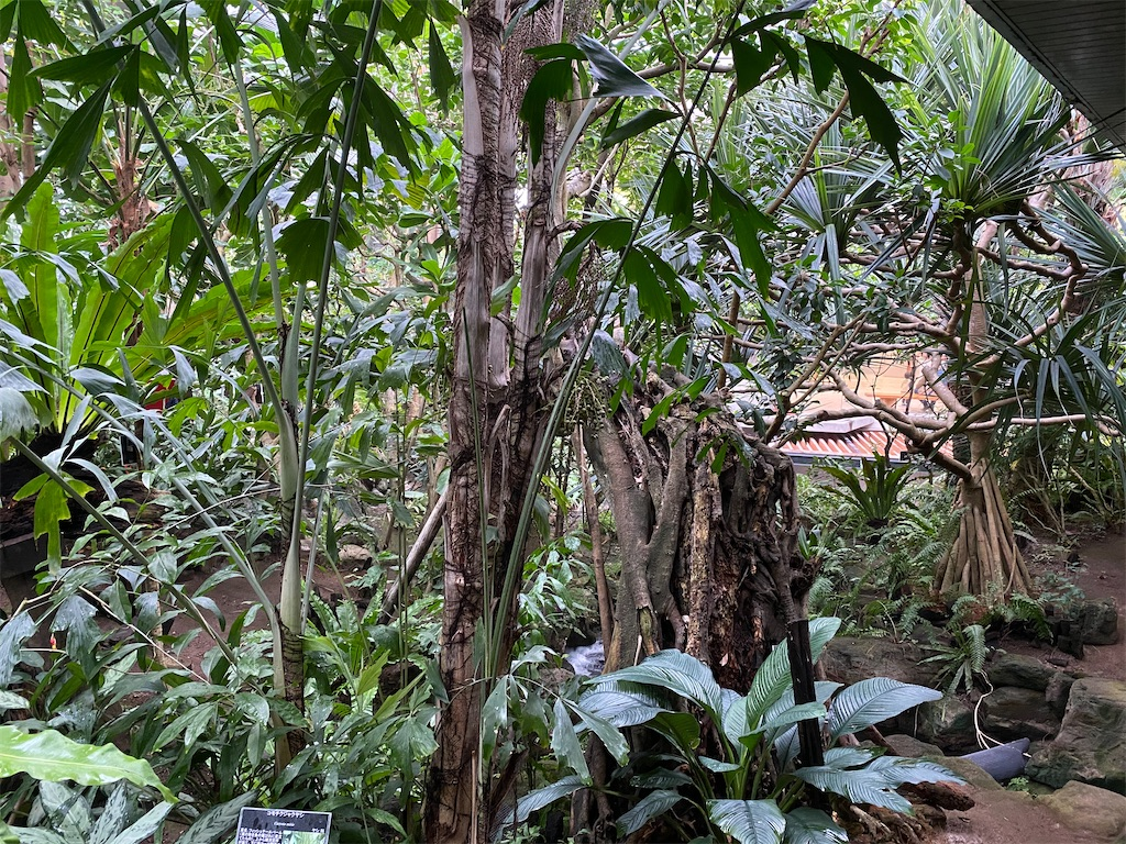 f:id:pitcherplant:20200527192404j:image