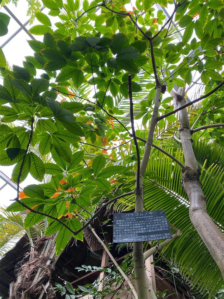 f:id:pitcherplant:20200527193604j:image