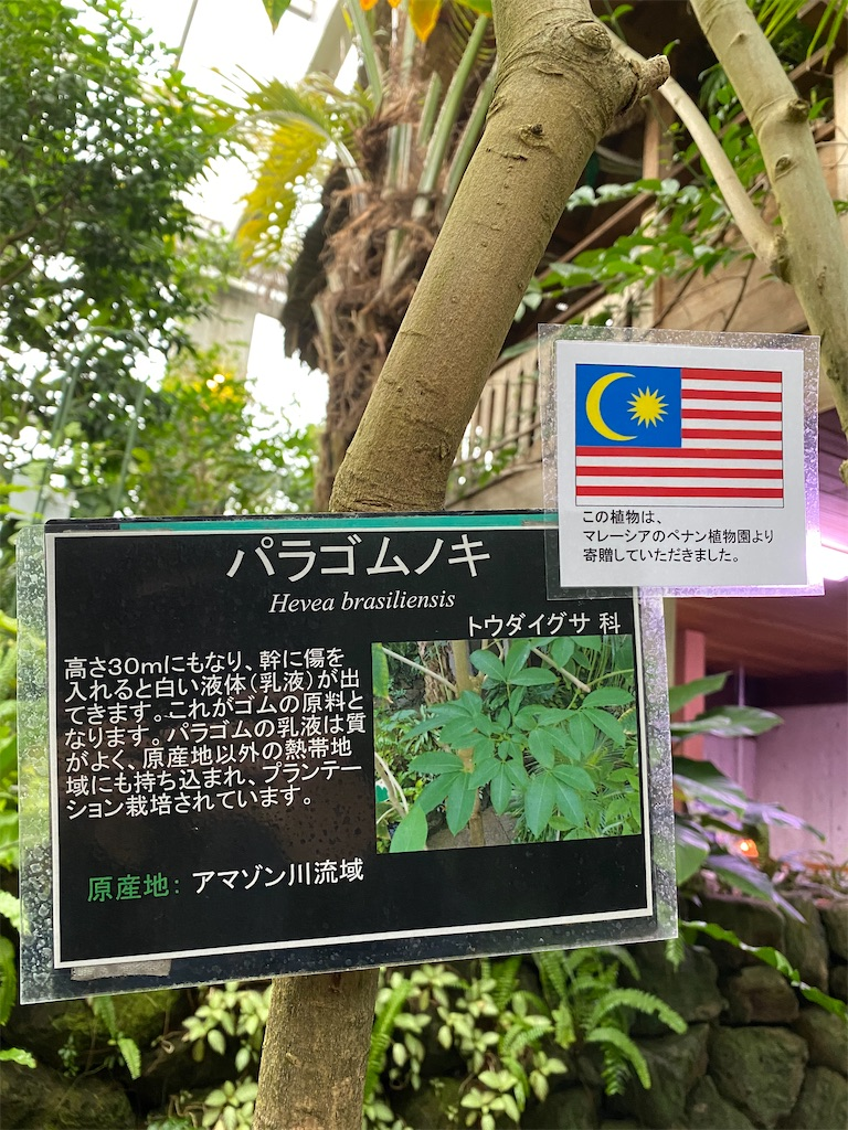 f:id:pitcherplant:20200527193610j:image