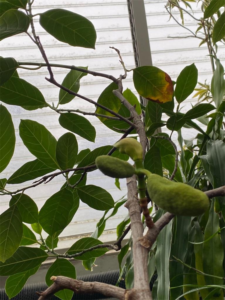 f:id:pitcherplant:20200527193640j:image