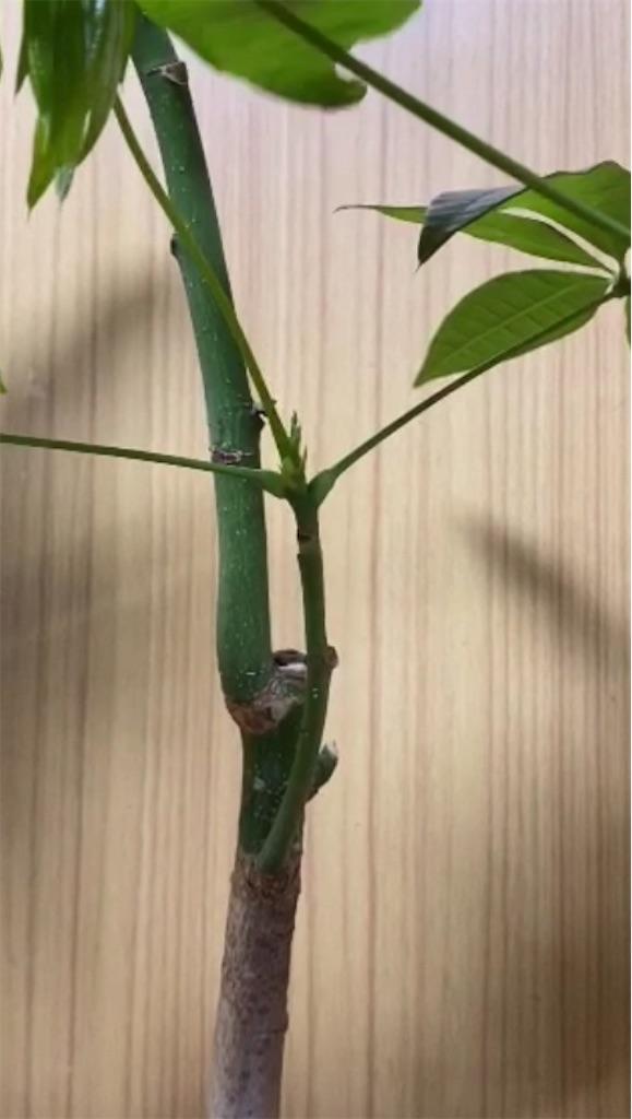 f:id:pitcherplant:20200622113556j:image