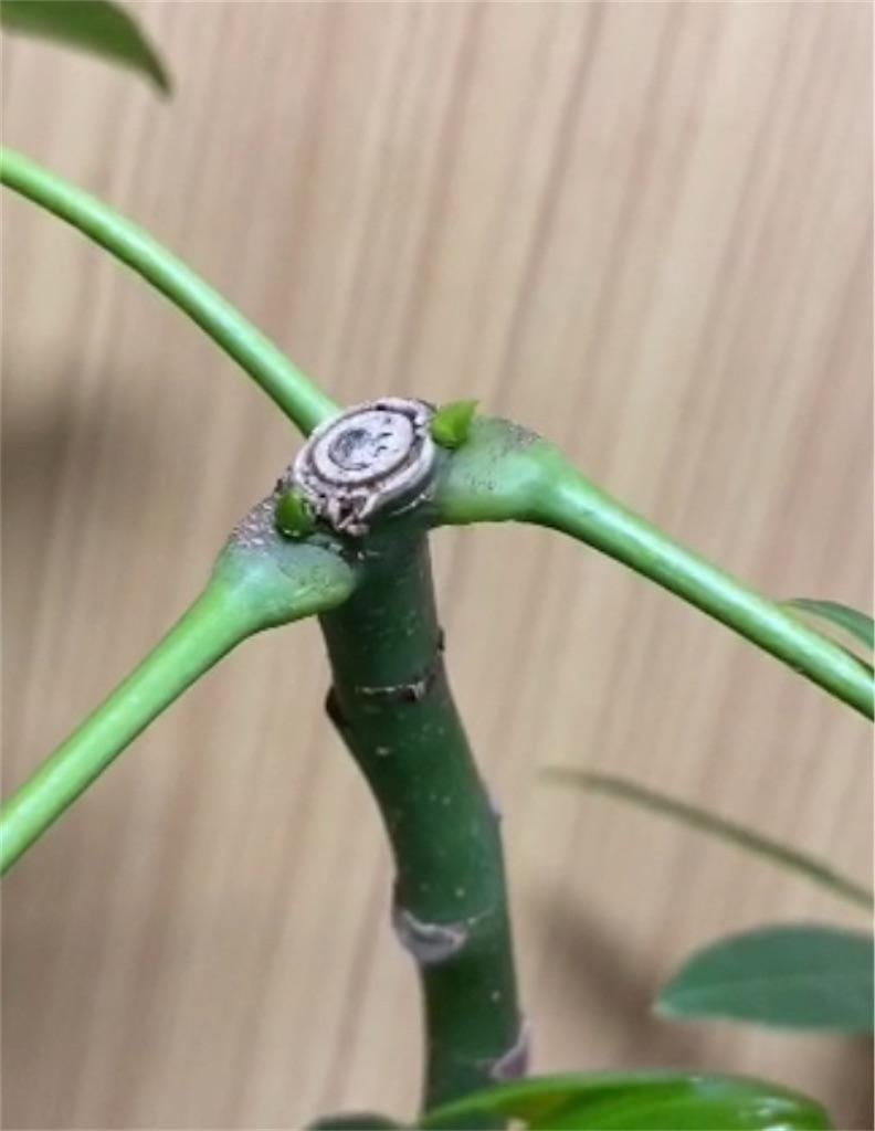 f:id:pitcherplant:20200622113749j:image