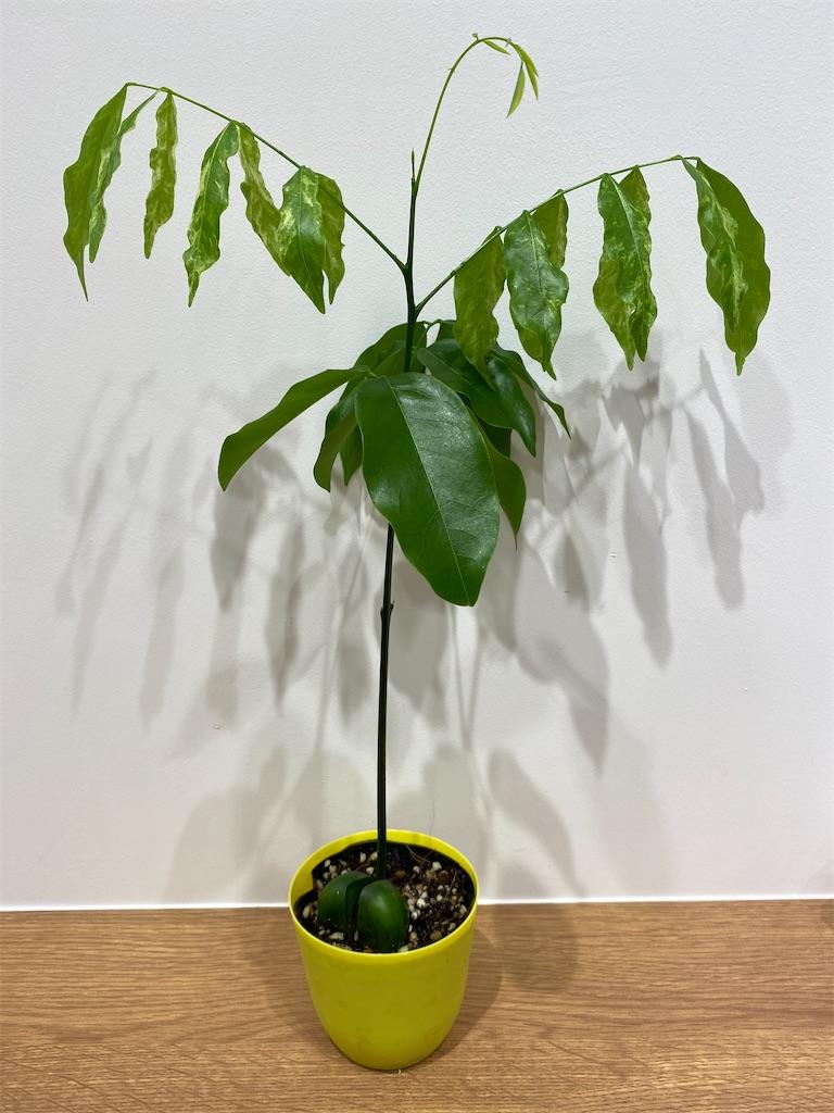 f:id:pitcherplant:20200728192603j:image